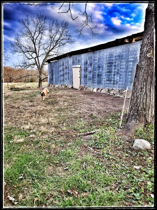 east side of the old goat barn